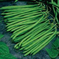 Fagiolini/cornette verdi (emilia romagna) 4,80/kg.